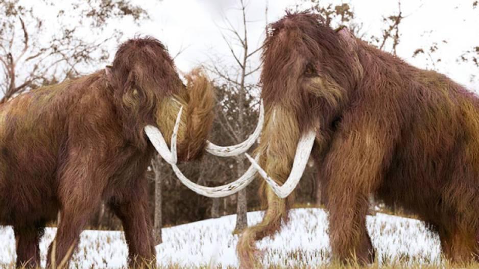 Giant Mammoths
