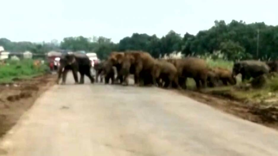 Elephant Movement Triggers Panic In Dhenkanal Village