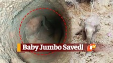 WATCH | Baby Elephant Rescued From Abandoned Well In Odisha