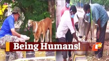 WATCH: Stray Animals Being Fed By Voluntary Organizations In Bhubaneswar During COVID19 Lockdown