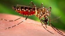Dengue Grips Odisha Amidst Coronavirus Scare, 61 Positive Cases Identified