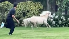 CSK Skipper MS Dhoni 'Tests His Fitness' With A Shetland Pony
