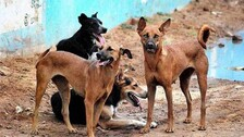 Stray dogs injure 12 persons on Rourkela Steel Plant premises