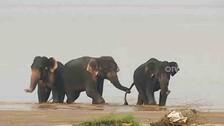 Rising Elephant Death Toll In Odisha Raises Concerns