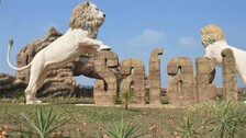 After Hyderabad, Two Lionesses Contract COVID At UP's Etawah Lion Safari