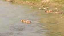 Bodies Of 'COVID19 Patients' Fished Out From Rivers: Experts Say Transmission Of Virus Through Water Is Not A Concern