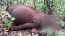 Odisha: Two Elephant Carcasses Found Near Similipal National Park