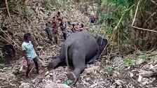 18 Elephants Killed In Lightning Strikes In Assam