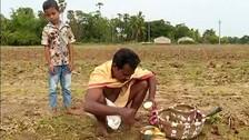 Akshaya Tritiya Marks Initiation Of Season's Agriculture Works, Chandan Yatra & Rath Construction