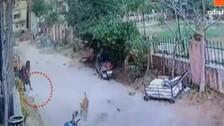 Retired Banker In Bhubaneswar Held For Getting Kittens Killed By Stray Dogs