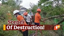 #CycloneYaas: Scenes Of Destruction In Mayurbhanj, Trees Uprooted, Houses Damaged
