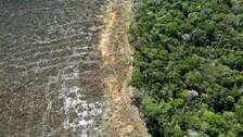 Record Levels Of Deforestation In Brazilian Amazon Continue