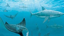 Wildlife Conservation Society Launches Initiative To Save Remaining Sharks, Rays