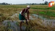 Odisha CM Announces Package For Yaas-Hit Farmers