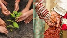 Plant A Tree, Get Married; UP Village Makes Tree Plantation Mandatory For Newlyweds