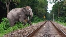 Odisha To Go Gujarat Way To Save Elephants From Killer Railway Tracks