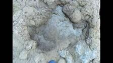 Six Species Of Dinosaur Last Walked On UK Soil 110M Years Ago, Footprints Found