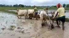 Fertilizer Shortage Haunts Odisha Farmers While Political Parties Busy In Blame Game