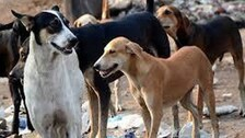 Animal Cruelty: Over 300 Stray Dogs Poisoned In Andhra Village, Activists Fume