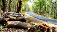 Odisha Suggests Translocation Instead Of Felling Of Trees For Road Construction Works