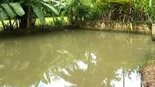 Girl's Body Found In Bhubaneswar Farmhouse: Diatom, Viscera Of Deceased Sent For Tests