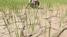 Odisha Govt Lays Out Action Plan To Tackle Possible Drought In State