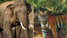 Simultaneous Elephant, Tiger Census In Odisha From 2022