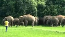 Odisha Tops Country In Human-Elephant Encounters