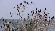 Bhitarkanika Monsoon Bird Count Over 1.08 Lakh, Up By 11 Per Cent