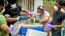 Nipah Returns: Know About Any Threat To Odisha; The Symptoms, Prevention Tips