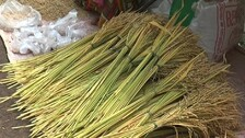 Nuakhai Celebration Kicks Off In Western Odisha Under Covid Cloud