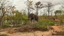 Bee-fence to Keep Jumbo Herds Off Human Settlements In Odisha