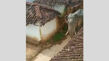 Incidents Of Elephant Scare Witnessed In Several Parts Of Odisha
