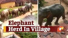 Giant Elephants Stray Into Odisha Village, Cause Damage