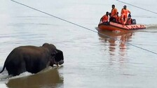 Why Jumbo Rescue Ops At Odisha's Mundali Doomed? No Lessons Learnt From Past!