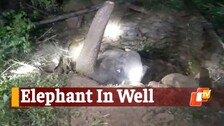 Elephant Gets Stuck In A Well In Odisha, Rescued