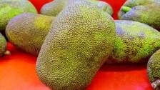 Koraput Gears Up To Produce Diabetic-Friendly Jackfruit Flour