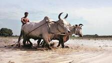 Politics In Odisha Heats Up Over KALIA, PM-Kisan Samman Nidhi Schemes