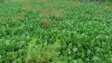 Odisha Govt Grants Rs 10.34 Cr For Renovation Of Luna River