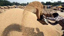 Over 16% Increase In Paddy Procurement Over Previous Season: Govt