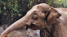 Two Elephants Die Of Suspected Electrocution In Odisha
