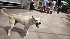 Shocking Cruelty: 150 Stray Dogs Buried Alive In Karnataka, 12 Arrested