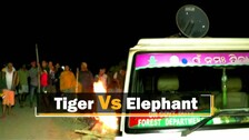 'Roaring Tiger' Played On Loudspeaker To Drive Away Elephants In Odisha's Keonjhar