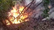 Odisha: Wildfires Continue To Rage Across State, Forest Officials On Toes