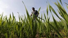 Over 70% Indian Agri-Households Possess A Hectare Or Less Land