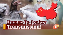 China Reports World's First Poultry-To-Human Transmission Case of H10N3 Bird Flu