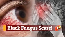 Odisha Declares 'Black Fungus' As Notifiable Disease Under Epidemic Act