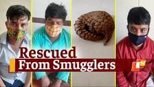 Odisha Police Crime Branch Seizes Live Pangolin, 3 Arrested