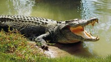 Croc Scare Hits Agricultural Activities In Kendrapara's River-Side Villages