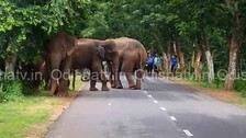 Odisha Govt Releases Over Rs 445 Cr To Power DISCOMs To Curb Elephant Deaths